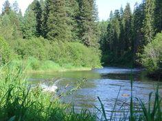 Chinook carcass surveys - Bear Valley, ID Bear, River, Mountains, Nature, Outdoor, Outdoors, Bears, Outdoor Games, Outdoor Living