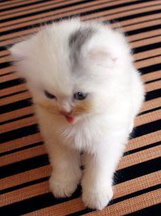 Kitten Comment Thumbnail
