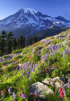 Plummer Peak, Mount Rainier...and other beautiful places to visit in Mt. Rainier National Park. #nationalparks #nps