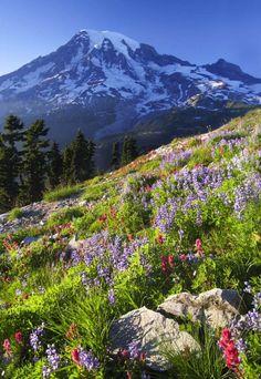 Plummer Peak, Mount Rainier
