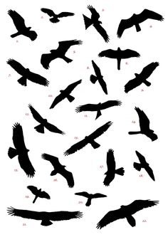 Spanish Raptor Silhouette Competition � Birding In Spain Blog - ClipArt Best - ClipArt Best
