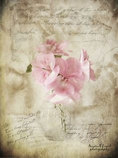 Geranium by Kerstin Frank art, via Flickr