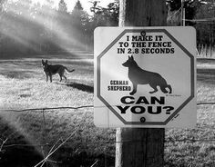 Funny Dog Sign | Funny Joke Pictures