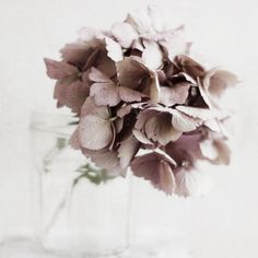 BRIONYMARSH//FLORALS Oh hydrangea how I love you xo www.brionymarsh.com