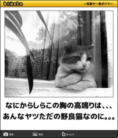 Funny Images, Funny Pictures, Kittens, Cats, Cat Lovers, Hilarious, Jokes, Japanese, Animals