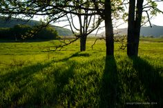 Merrimac Preserve 2014 - Green covers the ground just weeks after a prescribed burn.  www.devilslakewisconsin.com