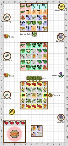 Garden Plan - 2014: Jenny's Garden, look at the variety and the companion planting and edged with pots of lavender, a lovely plan.
