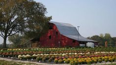 """Tennessee, agritourism, growing! Is agritourism the new """"rural tourism"""" in the US? Is agritourism the best direction for small family farmers?"""
