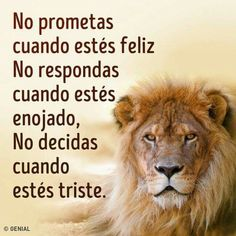 Wisdom Quotes, Love Quotes, Inspirational Quotes, Healing Verses, Rainbow Falls, Quotes En Espanol, Chicano Art, Lie To Me, Business Motivation