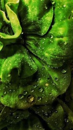 Floating plant  #plant #dew #rain #rainy #monsoon #climate #friends #stoned