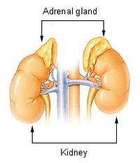 3 tips for Adrenal Fatigue