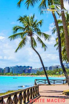 Imagem do deck e coqueiros compondo a paisagem da Praia de Ponta Verde em Maceió, Alagoas, Brasil. Outdoor Furniture, Outdoor Decor, Beautiful Beaches, Wallpaper Backgrounds, Palm Trees, Brazil, Deck, Places, Summer