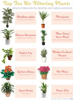 top 10 air filtering plants!