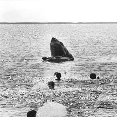 From a deleted scene of JAWS showing the shark killing little Alex Kintner. It was cut from the movie for being too graphic.