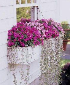 Window Box Flowers, Balcony Flowers, Front Yard Flowers, Window Planter Boxes, Planter Ideas, Plants For Window Boxes, Hanging Window Boxes, Flower Garden Design, Garden Planters