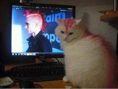 Cat looks like Jared Leto