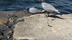 Galapagos, Ecuador by Rene Pérez - YouTube