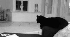 High Five Black Cat
