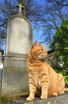 A Cat in Pere Lachaise Cemetery, Paris, France.