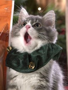 Caroling Cat. So cute!!!