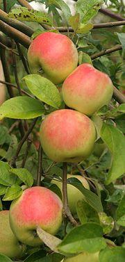 Filippa æbler