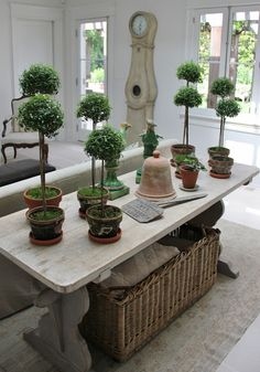 Inspiration in White: Olive Trees & Myrtles - lookslikewhite Blog - lookslikewhite
