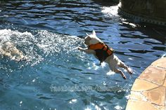 Barbie Dives In!  facebook.com/moonpieds  #frenchbulldogs