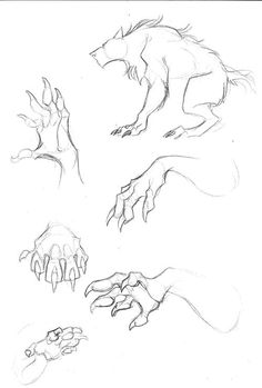 Drawing Tips Cats Hand Reference, Drawing Reference Poses, Drawing Poses, Drawing Tips, Animal Sketches, Animal Drawings, Art Drawings, Fantasy Wesen, Werewolf Art