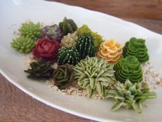 potted succulents No.01
