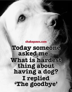 I Love Dogs, Puppy Love, Cute Dogs, Pet Sitter, Pet Loss Grief, Dog Poems, Pet Remembrance, Animal Quotes, Animal Pics