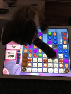 Candy Crush spelen Cute Cats, Kitty, Games, Corse, Kawaii Cat, Plays, Kitten, Kitty Cats, Gaming