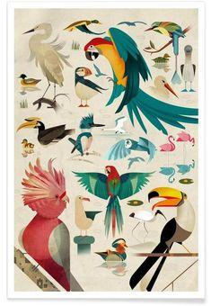 Birds by Dieter Braun - East End Prints Art Mural, Wall Art, Bird Poster, Poster Art, Bird Prints, Framed Art Prints, Canvas Prints, Vogel Illustration, Digital Illustration