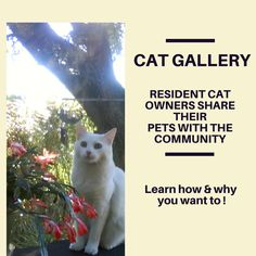 A fun way to get cat owners involved in community activities! Read more at http://rechargingretirees.blogspot.com/2013/06/cat-gallery-brings-community-together.html