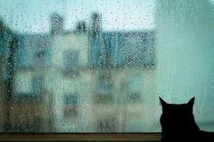 rainy day | Source: 健