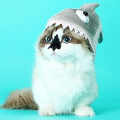efa3434a Bucking Sharkaroo Men's T-shirt (GT4780-101BLK) Cowboy tees, cats, sharks,  rainbows, cats tees, cat lovers, shark week, funny cat t-shirts   just cool    Cat ...