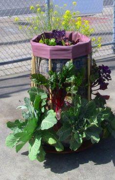 Try a vertical garden!!