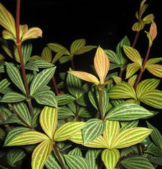 Top 10 houseplants for low light.  Perfect for basement!