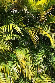 #green #palmtrees #tropical