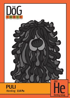 Puli from the Herding Group - Dog Breed Trading Cards  http://dogbreedtradingcards.tumblr.com/post/21847961585/114-pu-puli-from-the-herding-group