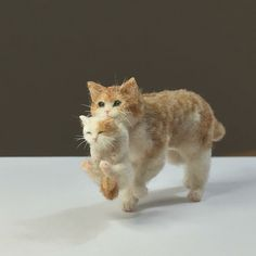 Tomoko Masakage mother cat and kitten