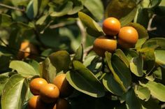10 Exotic Fruits You Didn't Know Can Kill You