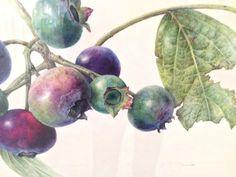 Oude Botanische Prenten : Beste afbeeldingen van botanische prenten herbs medicinal