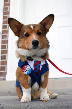 Finally a candidate I can get behind (for a walk).