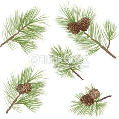 Vector Art : Pine tree branch with cone set. Vector illustration