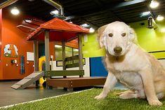 Dog Kennel, Dog groomer, Dog grooming, Dog Boarding in Dallas Dog Kennel Cover, Diy Dog Kennel, Kennel Ideas, Dog Kennels, Pet Daycare, Daycare Ideas, Indoor Dog Park, Dog Playground, Pet Hotel
