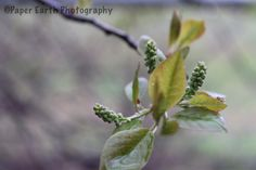 New life New Life, Pretty Pictures, Leaves, Plants, Cute Pics, Cute Pictures, Plant, Planets