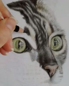 Cat drawing dry color coloring - Home Decor ideas &Home Garden & Diy Realistic Animal Drawings, Pencil Drawings Of Animals, Drawings Of Cats, Sketches Of Animals, Drawing Animals, Art Drawings Sketches Simple, Colorful Drawings, Color Pencil Art, Cat Drawing