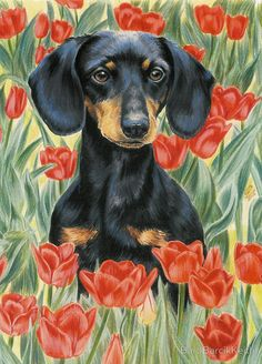 Shop for Barbara Keith 'Dachshund In Tulips' Canvas Art. Get free delivery On EVERYTHING* Overstock - Your Online Art Gallery Store! Basset Dachshund, Arte Dachshund, Dachshund Love, Daschund, Clever Dog, Most Popular Dog Breeds, Weenie Dogs, Doggies, Dog Paintings