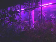 Resultado de imagem para neon aesthetic