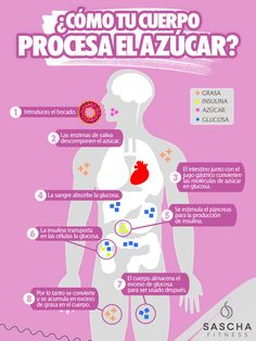¿Cómo el cuerpo procesa el azúcar?